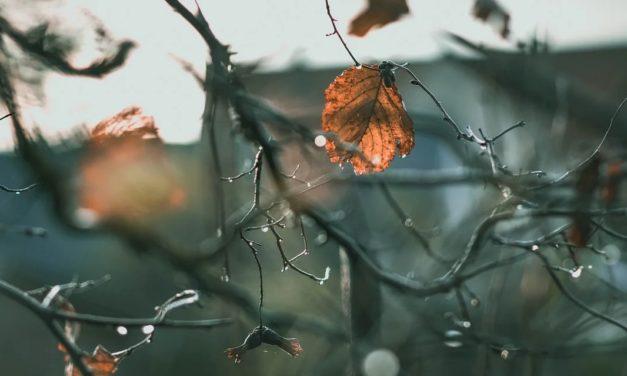 Actualités – Articles et critiques du mois de novembre 2020