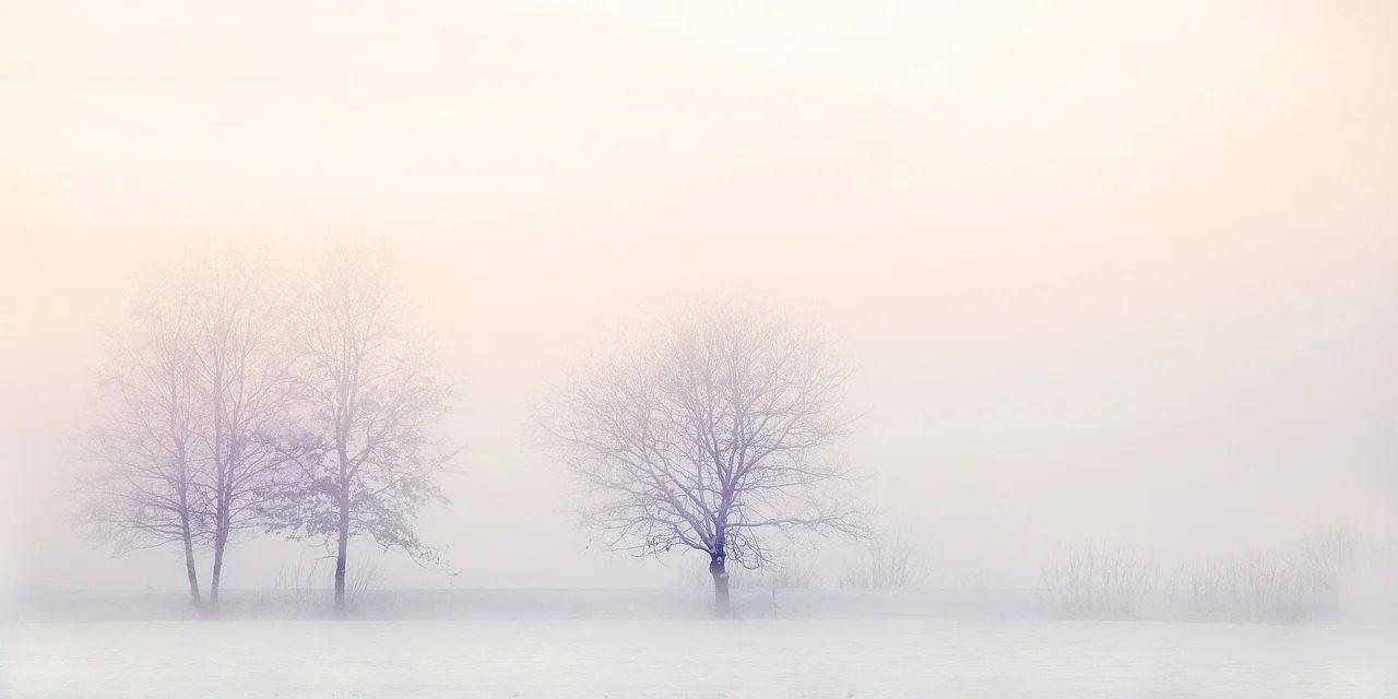 Actualités – Articles et critiques du mois de décembre 2020